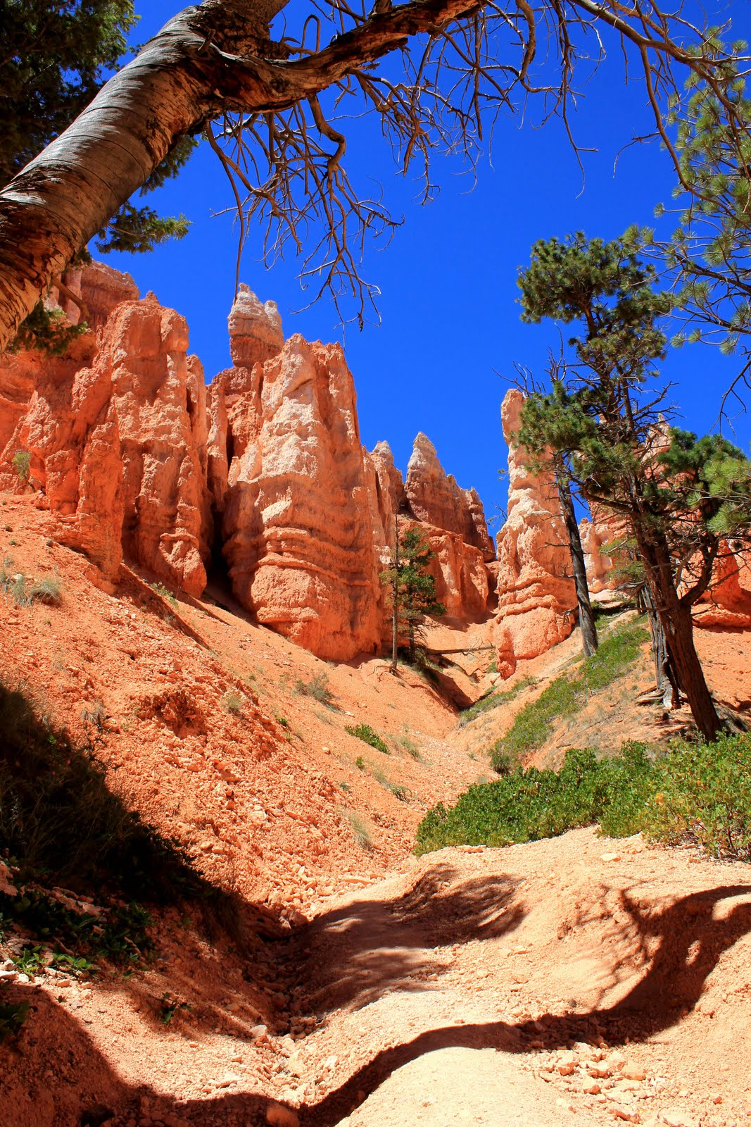 2011 – Grand Canyon et Bryce Canyon