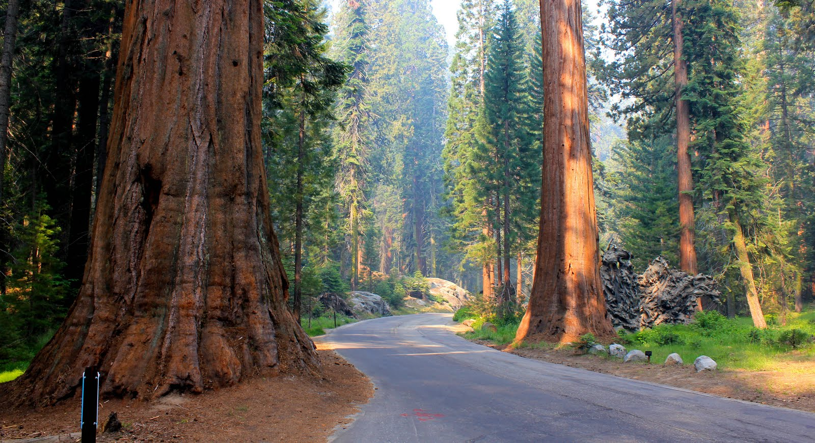 2011 – Le parc national Sequoia