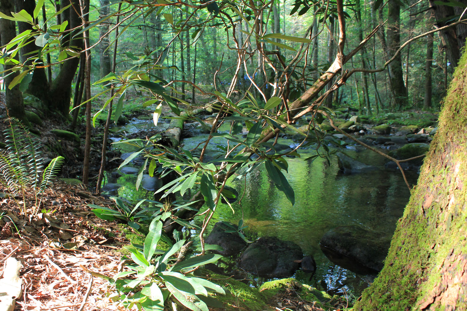 2012 – Le parc national Great Smoky Mountains