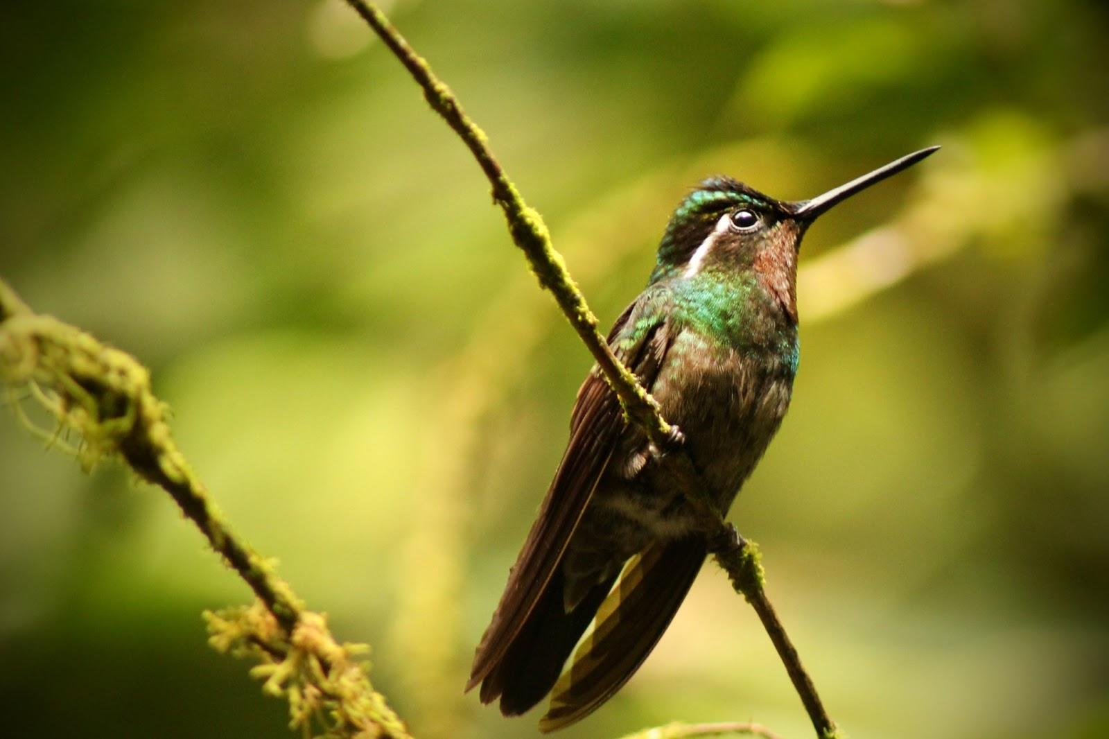 2013 – Monteverde, une tyrolienne de 1 km dans la forêt de nuages