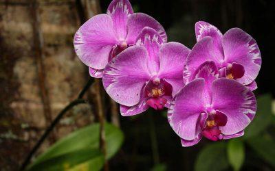 Été 2016 – Big Island-Hawaii, partie 1 (Jardin botanique et le Refuge)
