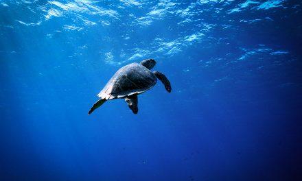 Automne 2019 – Premier voyage de plongée à Little Cayman