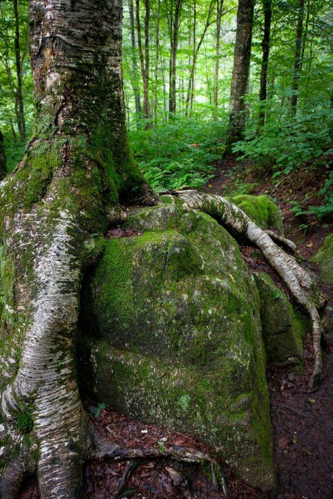 Activité des abris sous roches