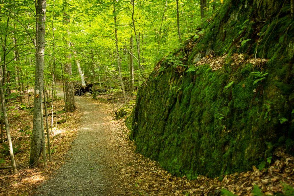 Dans le sentier de l'Étang-Fer-de-Lance