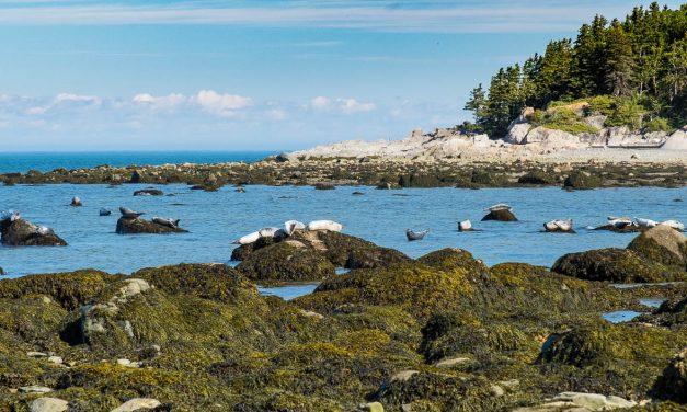 Été 2020- Parc national du Bic